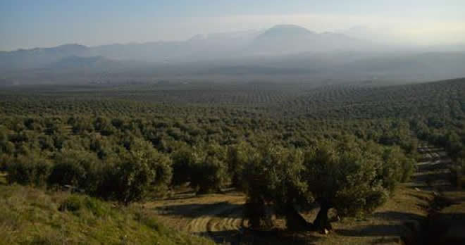 Programa Cultura del Olivo @ Rutas del Olivo